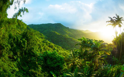 Why El Yunque Forest Should Be In Your Bucket List Trip
